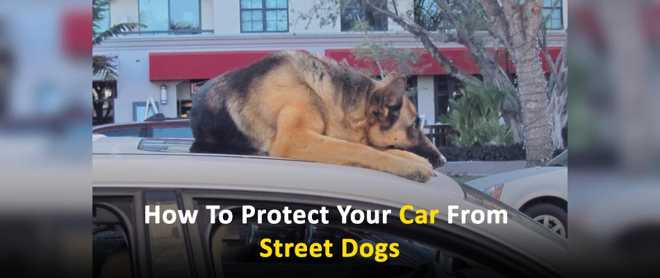 How To Protect Your Car From Street Dogs
